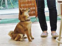犬のしつけ方教室 7/6 - SUPER DOGS blog