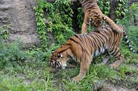 虎雨 - 動物園へ行こう
