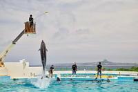 沖縄周遊の旅・・・美ら海水族館(2) - 四季の予感