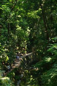 緑深い等々力渓谷を散策 - kenのデジカメライフ
