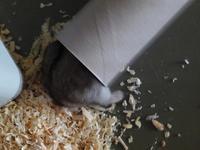 転がるトイレットペーパーの芯 (Criceto)  - エミリアからの便り
