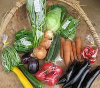 今週の野菜セット7月2週目 - まるみど農園のあれこれ日記