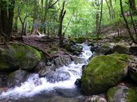 藤ヶ沢歩道でなまこ岩までミニハイク - 白壁荘だより  天城百話