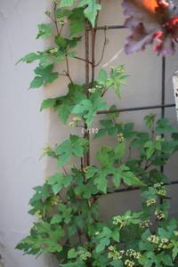 夏から晩秋までの楽しみ - CHIROのお庭しごと