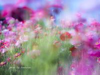 恋の予感 - Photographie de la couleur