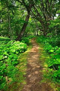 奥日光 森に続く道 - 風の香に誘われて 風景のふぉと缶