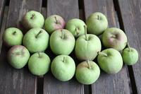 まいりんごの剪定 - 日々ニコニコ