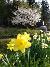 畑の春 〜うちの畑〜 - 日々ニコニコ