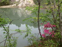 池巡り - 加茂のトンボ (トンボ狂会)