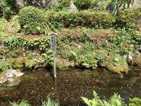 『清水湧く地蔵川の梅花藻風景~』 - 自然風の自然風だより