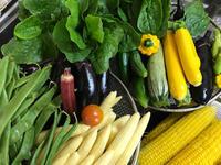 朝採り野菜♡ - せいじつ野菜