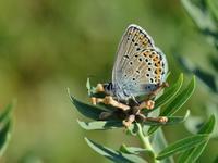 草原の風に翔ぶ蝶を追って(その1) - 不思議の森の迷い人