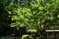 新緑の大原三千院~「苔の庭園」と「わらべ地蔵」に癒される - Tomの一人旅~気のむくまま、足のむくまま~