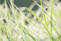 今日の草むラーw - ainosatoブログ02