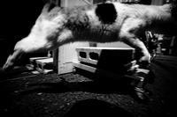 路地猫ジャンプ! - Yoshi-A の写真の楽しみ