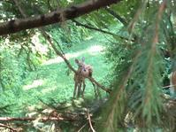 子鹿のバンビ ざま巣 - 幾星霜Ⅱ