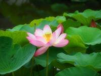 古代の蓮と庭瀬往来 - つれづれ日記