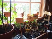 9/26 herbs'haven in 横浜 英国ハーブ療法カウンセリング - 英国メディカルハーバリスト