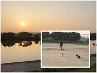 17年7月8日 グランドでサッカー♪ - 旅行犬 さくら 桃子 あんず 日記