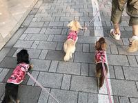 17年7月9日 みんなであさんぽ♪&ネムネム・・・zzz - 旅行犬 さくら 桃子 あんず 日記