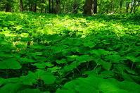 クワズイモの森 - 風の香に誘われて 風景のふぉと缶