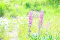 河原の花たち。 - Precious*恋するカメラ