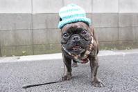 手編みの帽子 - 平日、会社を休んだら