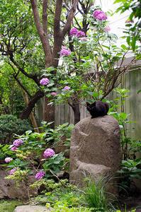 最近の猫事情26 - 鳥会えず猫生活