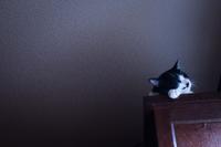 猫スナップ - 糸巻きパレットガーデン