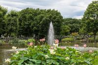 府中・修景池の噴水と蓮 - あだっちゃんの花鳥風月