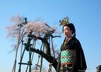 【 NAGAI TIMES - No.04「 @ 長井の桜 」 】 - 劇団美意識 AKiRa times