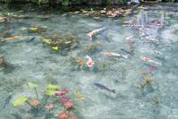 根道神社の池 - 尾張名所図会を巡る