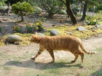 猫の庭 - すみやのひとり言・・・