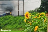 向日葵のつぶやき - 蒸気をおいかけて・・・少年のように