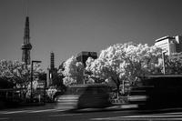 2017年7月14日 白い街路樹に驚愕してダッシュで逃げるクルマたち - Silver Oblivion