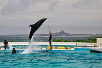 沖縄周遊の旅・・・美ら海水族館(3) - 四季の予感