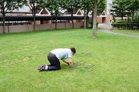 芝生の白詰草を手入れする住民 - 照片画廊