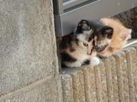 さつきーず - 愛犬家の猫日記