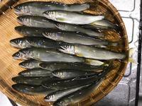 7月9日(日)の釣果 - 鮎毛鉤釣りの旅
