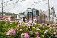 電車とアジサイ。 - Omoブログ