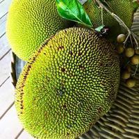 TROPICAL FRUITS - Michie @ Palekaiko