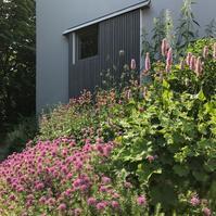 北海道の初夏の頃に咲く花♪ - Bleu Belle Fleur☆ブルーベルフルール