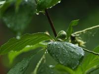 今日も雨 - 心の風景、野山を歩けば~