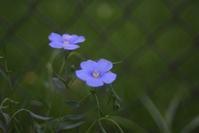 Flowers in early summer 1 - Casa de NOVA in Minnesota