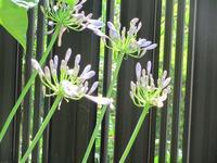 庭の花達・・・ - るーちゃん日々雑感