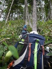 飛騨のヤブ山・鎌ケ峰 - 山にでかける日