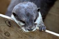 生き残りの動物園 - miyabine's フォト日記2~身の周りのきれい・可愛い・面白い~