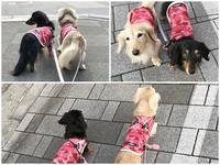 17年7月10日 あちい~;^^ - 旅行犬 さくら 桃子 あんず 日記