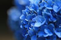 紫陽花~大乗寺丘陵公園~ - 今日の空+α2