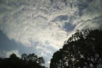 夕方の散歩(5cut) 文京区辺り -     ~風に乗って~    Present